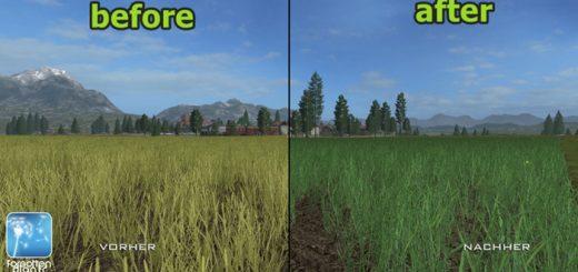 forgotten-plants-wheat-barley-02