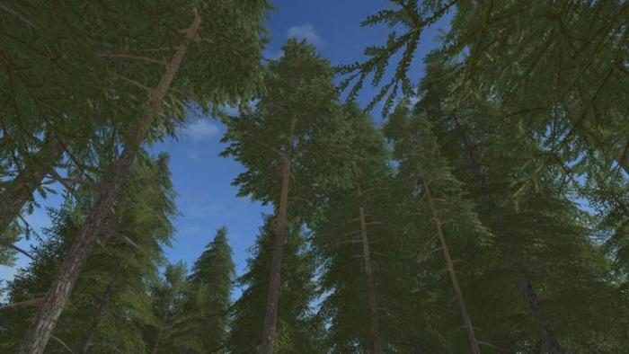 pine-fs17