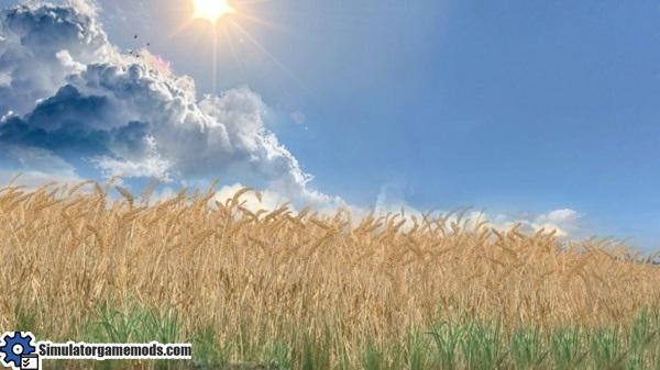 wheat-barley-texture