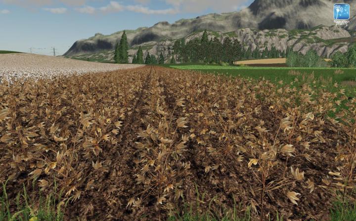 FS19 - Forgotten Plants - Cotton V1 | Simulator Games Mods Download